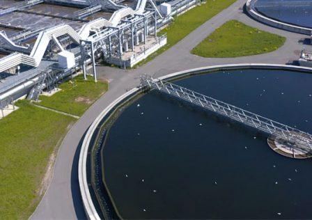 water-plant.jpg