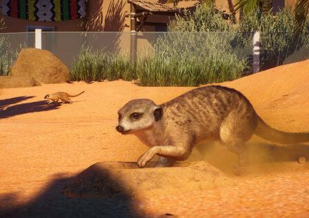 meerkat-planet-zoo-africa.jpg